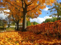 Enjoy golden autumn in Ventspils!