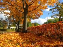 Izbaudi zelta rudeni Ventspilī!