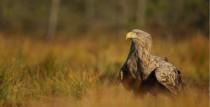 Putnu vērošana Saldū 24. martā