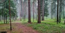 Aicinām piedalīties individuālajā meža un piejūras pārgājienā Ventspilī