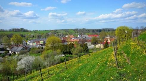 Sabiles Vīna kalns vērs vārtus apmeklētājiem 15. maijā