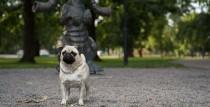 С собакой в Вентспилс на фотоконкурс «Vau, Ventspils ķepas!»