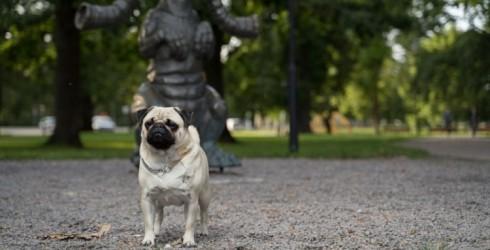 "Visit Ventspils with your dog to participate in the photo contest ""Vau, Ventspils ķepas!"""