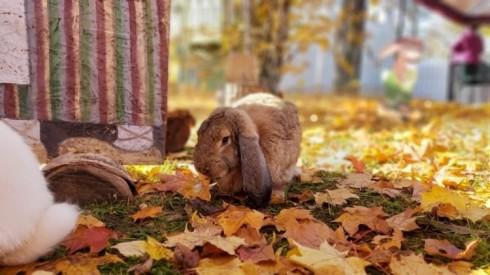 Rabbit Manor - Kalvene rabbit
