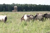 Dunduru pļavas