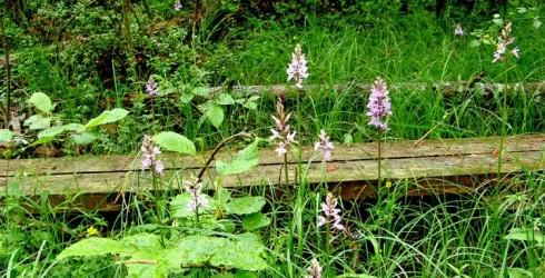 """Dabas parka """"Engures ezers"""" Orhideju taka un ezera pļavas"""