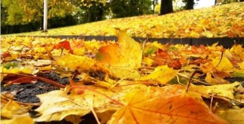 Aizraujoši rudens piedzīvojumi kopā ar bērniem Liepājā un tās apkārtnē